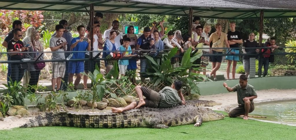 Croc show in Langkawi